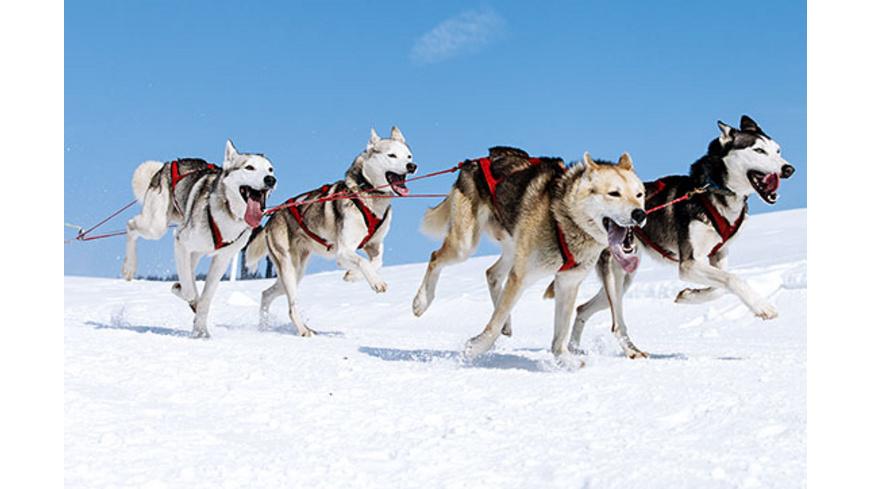 Husky-Ausfahrt & -Trekking im Altmuehltal