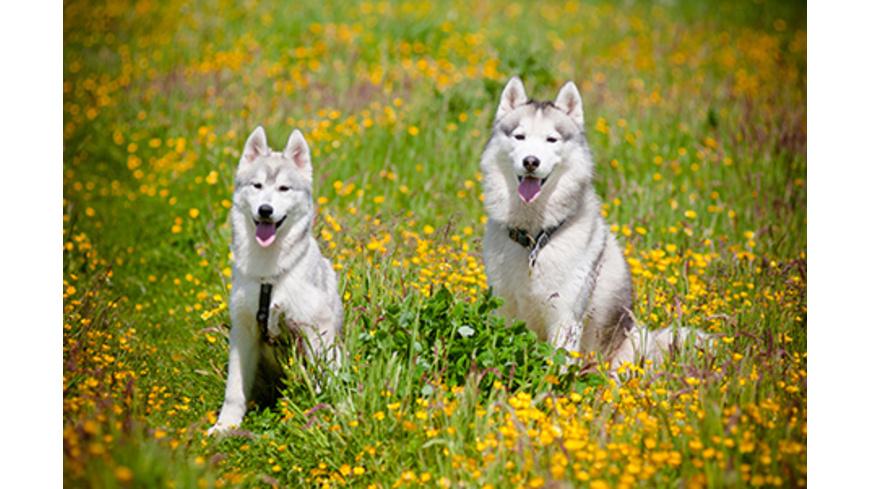 Familientag mit Huskies bei Deggendorf
