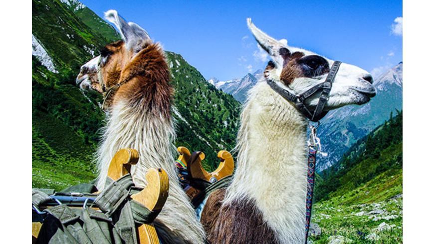 Lama-Trekkingtour