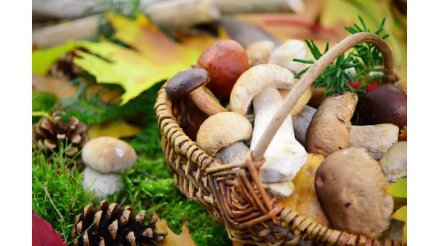 Pilze bestimmen für Anfänger bei Bad Kissingen
