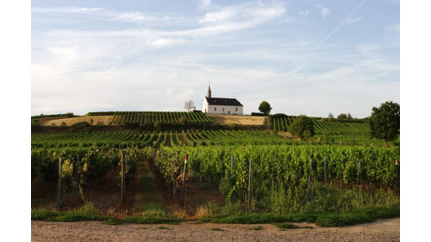 Kulinarische Weinbergwanderung in Worms