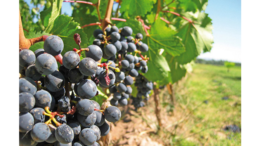 Kurzurlaub mit Weinprobe am Kaiserstuhl für 2