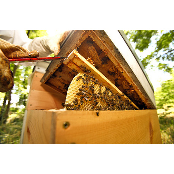 Besuch beim Imker mit Honig-Verkostung für 2
