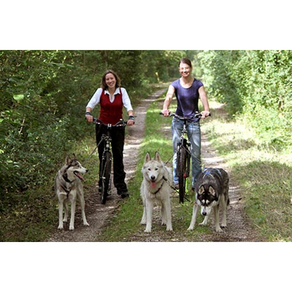 Husky-Dogscooter Tour