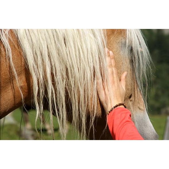 Mental-Coaching mit Pferden bei Zell am See