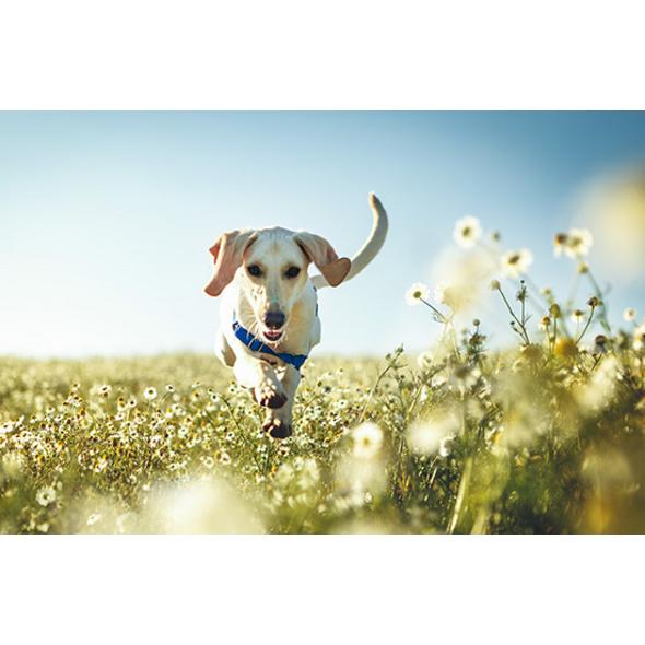 Urlaub mit Hund in der Steiermark für 2