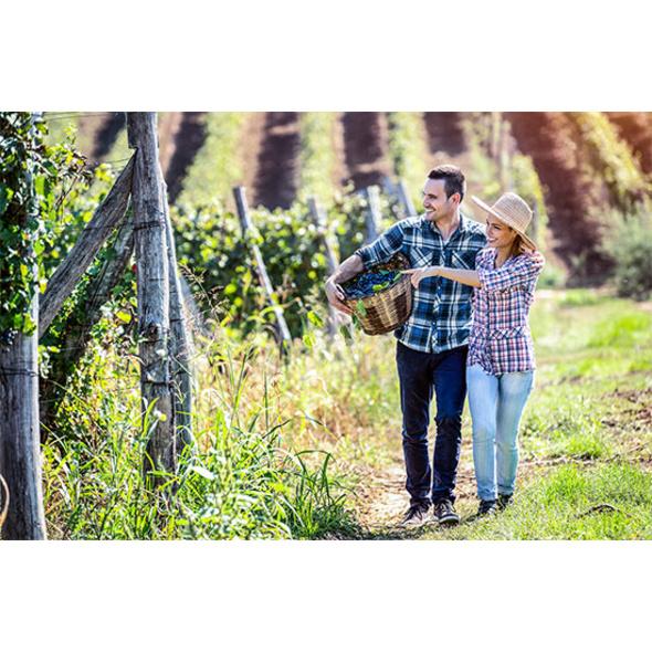 Weingut-Kurzurlaub in der Steiermark für 2