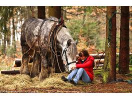 Holzruecken mit Pferden im Bergischen Land
